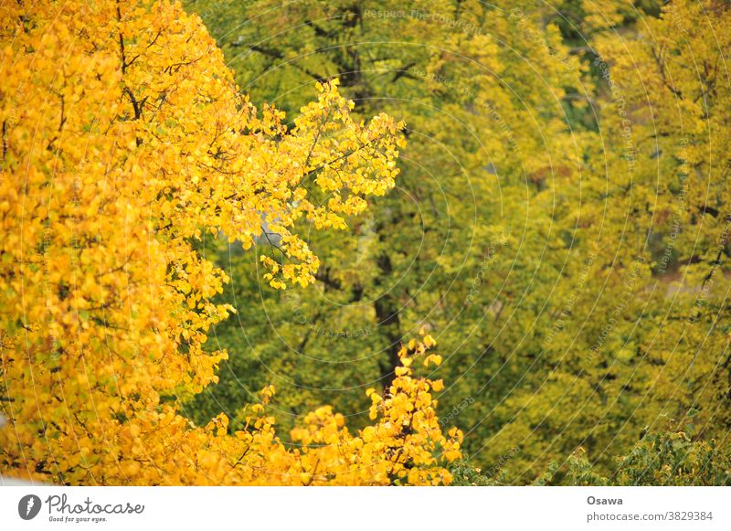 autumn foliage Autumn trees Yellow Orange Green branches twigs Treetop Plant Twigs and branches Nature Exterior shot Deserted Leaf Colour photo Day