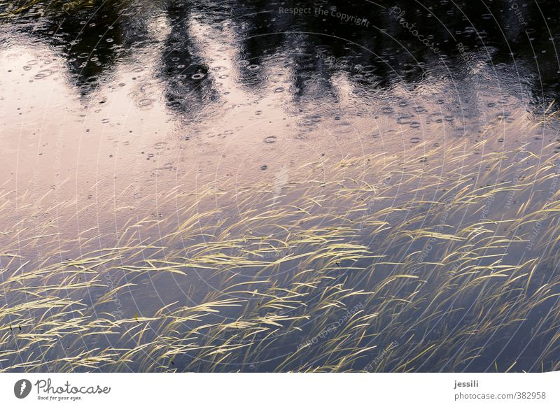 ..rain again Environment Nature Landscape Water Drops of water Summer Bad weather Wind Rain Plant Tree Grass Leaf Foliage plant River bank Brook Romance Honest