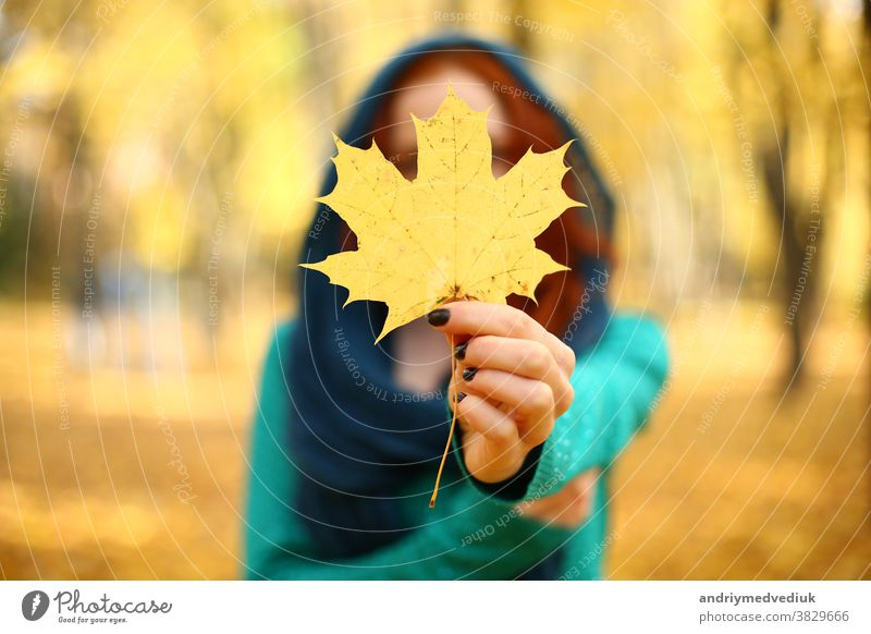 girl holding a yellow maple leaf in autumn. Autumn leaves. selective focus female park foliage forest woman beautiful nature fall hand colorful october season