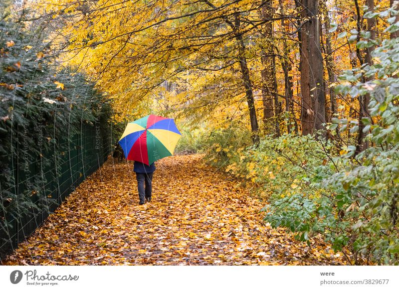 Person walks with colorful umbrella in the forest under autumnal leaves in the rain Autumn Recreation Walk autumn color autumn forest bad weather caucasian