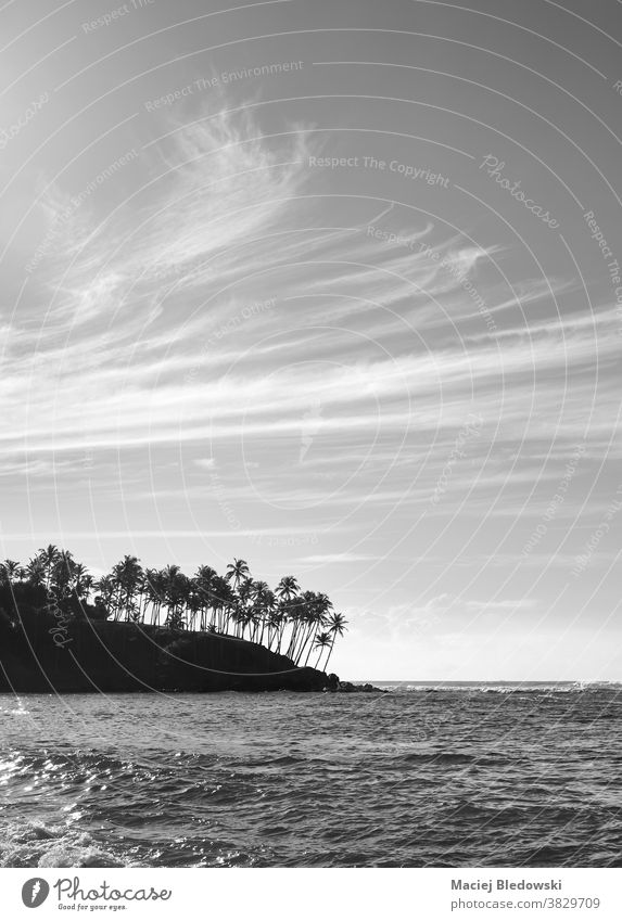 Black and white picture of tropical island coast with palm trees silhouettes at sunset. sea nature black and white Sri Lanka ocean landscape B&W destination