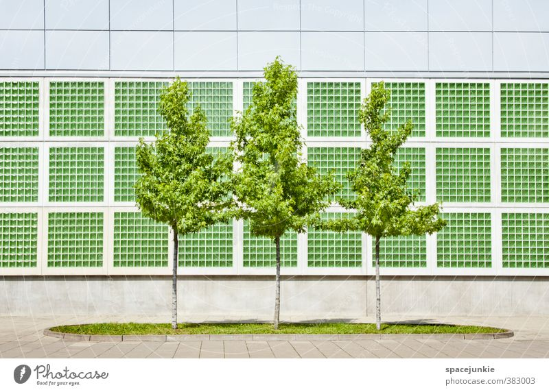 green trees Environment Nature Summer Beautiful weather Tree Grass Foliage plant Downtown Deserted House (Residential Structure) Architecture Wall (barrier)