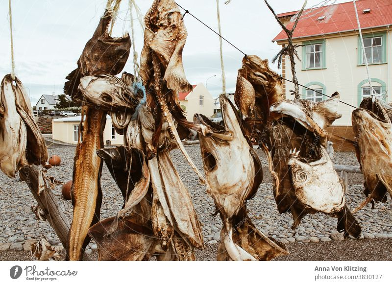 Dried fish heads Fish head dried fish Dead animal Day Nutrition Food Animal Death Detail Colour photo Fish market leash houses House (Residential Structure)