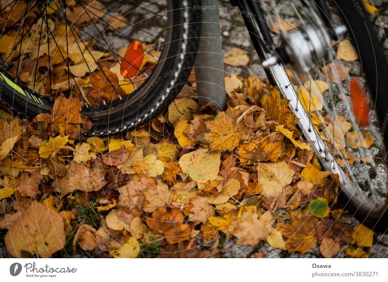 Bicycles on autumn leaves Wheel Tire Bicycle tyre front tyre Spokes Wheel rim Hub Reflector foliage Autumn Cycling smooth slippery peril Sudden fall Parking