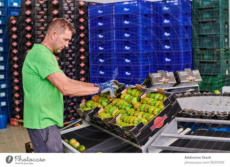 Man working in grocery market tomato package man box container employee green carton male worker job cardboard occupation service prepare uniform storage food