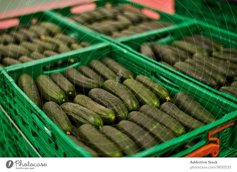 Fresh cucumbers in plastic containers vegetable farm package agriculture organic harvest food facility tasty ripe row natural production healthy box fresh