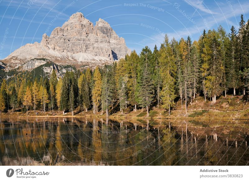 Lake in forest against mountain peak in summer lake coniferous range highland sunny landscape the dolomites italy calm water tranquil evergreen picturesque