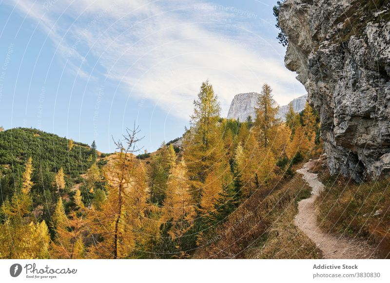 Trail in mountains near autumn forest the dolomites range trail highland woods fall nature italy tree hill picturesque landscape scenery green yellow road