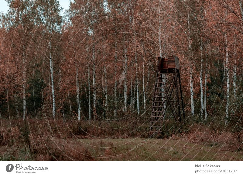 wooden hunting tower in birch forest in October sky nature grass tree green blue landscape house field hunter old hut summer clouds view meadow ladder cabin