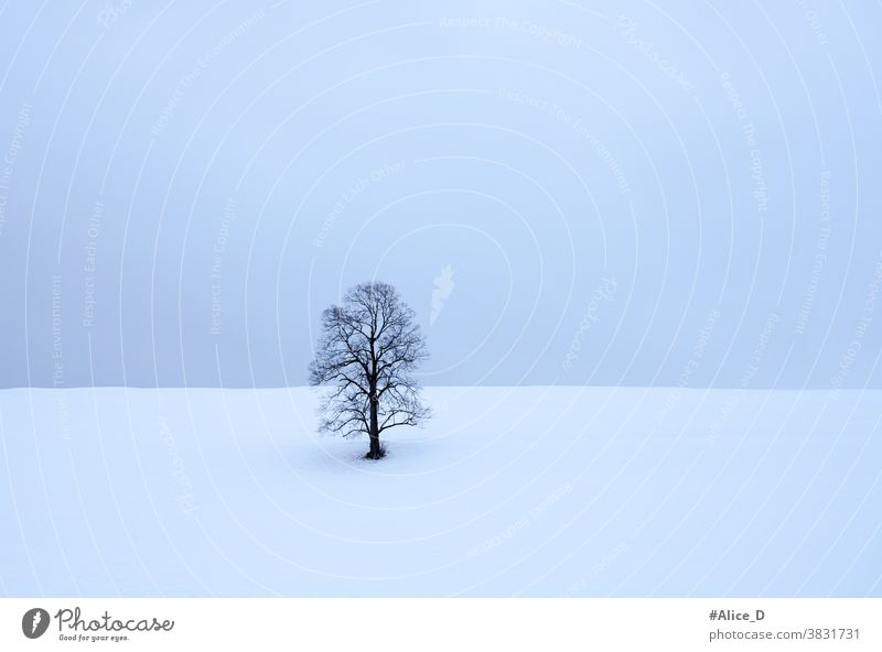 lonely leafless tree in snow white landscape abstract alone background bare beautiful beauty black blue branch bright christmas cold day empty environment field