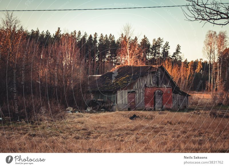 rural wooden hut old abandoned and pine trees forest landscape aged ancient architecture autumn background barn broken building cottage country countryside