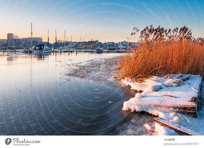 View over the Warnow to Rostock in winter Winter Town River Mecklenburg-Western Pomerania Warnov reed city harbour marina boat ship Architecture houses Building