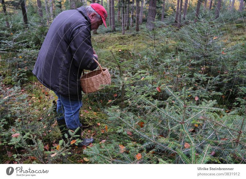 Senior is out mushrooming in the forest Senior citizen Man Old man mushroom pick mushroom season Basket Forest mushroom search Undergrowth