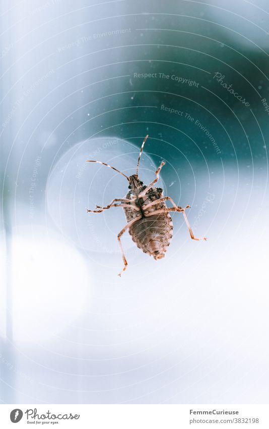 Macro shot stink bug on window pane with view on its underside (abdomen) Bug Stomach Legs bottom Macro (Extreme close-up) macro photography Window pane Pane