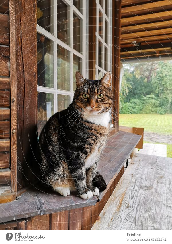 This beautiful and cuddly soft cat guards its territory attentively. Cat One animal pets Pelt feline Fluffy White Outdoors Green Nature Garden plants Looking