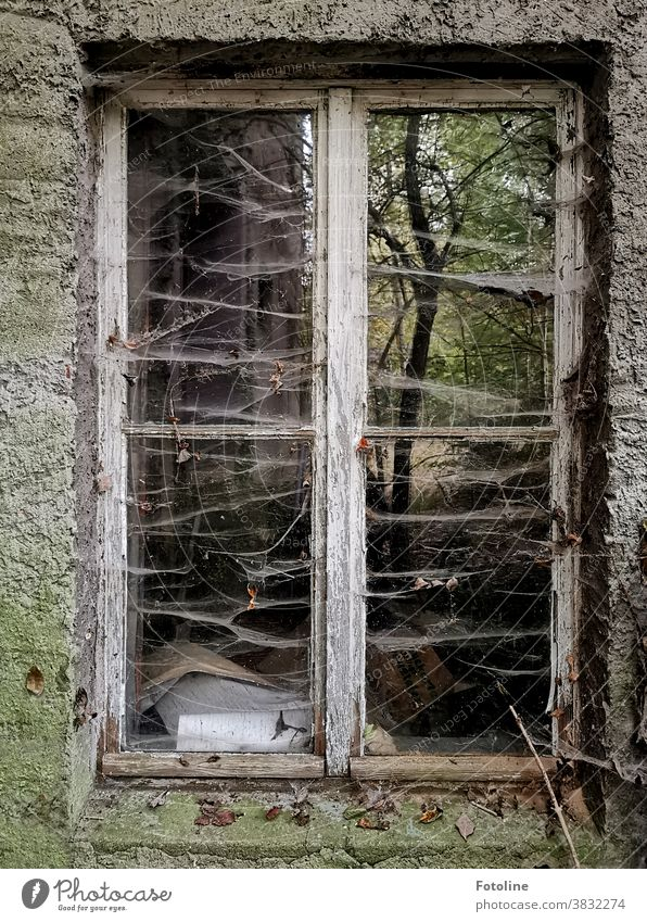 No windows have been cleaned here for a long time. Very long - or the window of a lost place is covered with many spider webs. Nevertheless a tree is still reflected in the window pane.