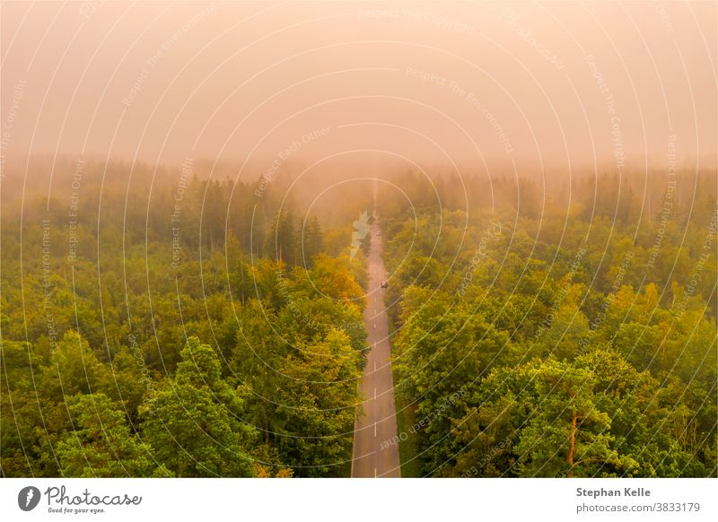 Foggy sunrise. Aerial view of a street straight through a forest at a very foggy morning, shot by a drone. mood glow dust car abstract summer nature road