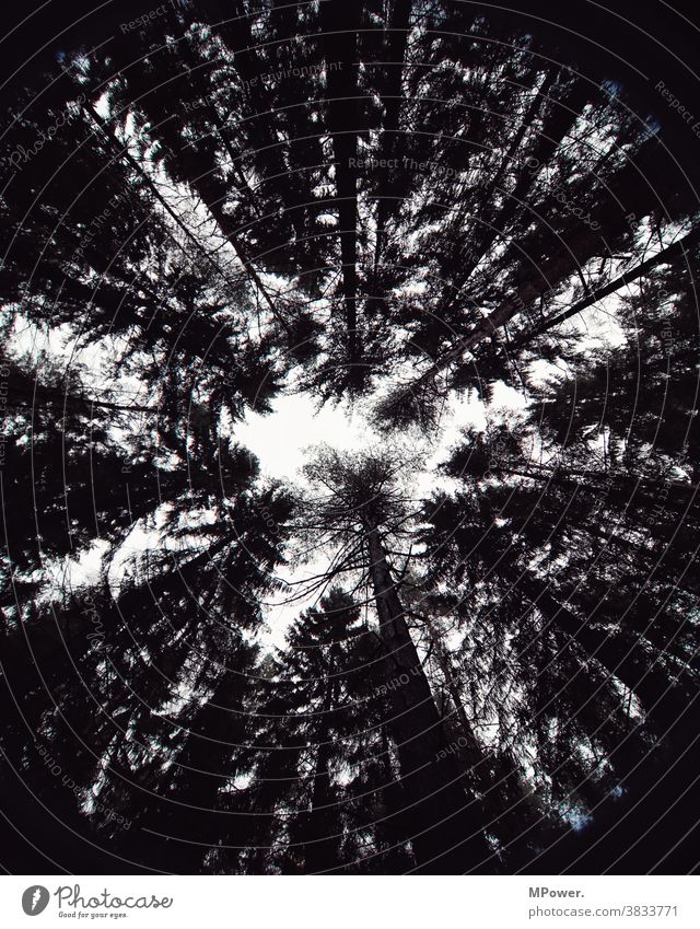 in the wood Forest trees Treetop silhouette Black & white photo Tall Nature Environment Deserted Sky Tree trunk Worm's-eye view