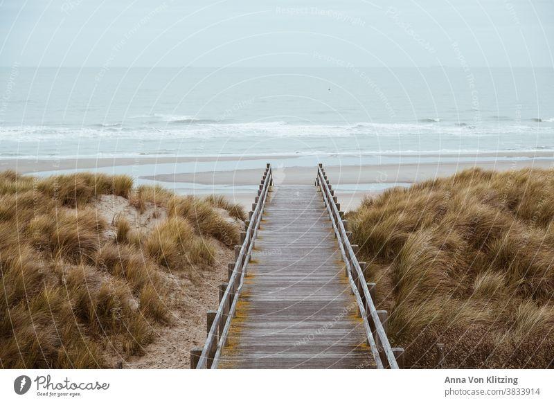 North Sea beach Ocean Beach Marram grass dunes Autumnal weather Rough sea seascape dutch Belgium vacation coast wooden walkway Vacation & Travel Nature