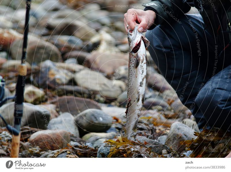 After the hunt Fishing (Angle) Trout Ocean Sea trout Animal Water Catch Fisherman fish Fresh Food Angler Lake Leisure and hobbies Fishing line Fishing rod