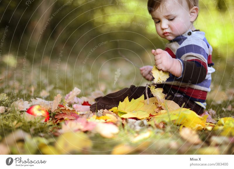 Human being Child Leaf Autumn Grass Playing Moody Infancy Sit Contentment Baby Happiness Cute Apple Toddler Autumn leaves