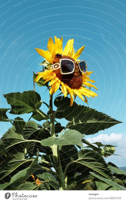¡Trash! 2020 |Look forward to a sunny year 2021 Sunflower Yellow Plant Summer Close-up Leaf Exterior shot Garden Nature Blossom Blossoming Deserted Green