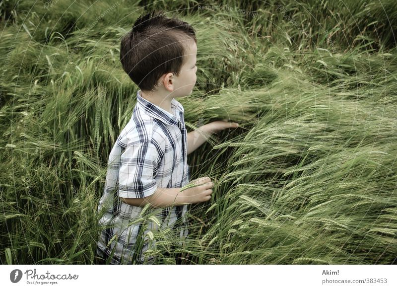 Child Nature Green Summer Loneliness Landscape Environment Meadow Playing Boy (child) Masculine Field Infancy Adventure Touch Curiosity