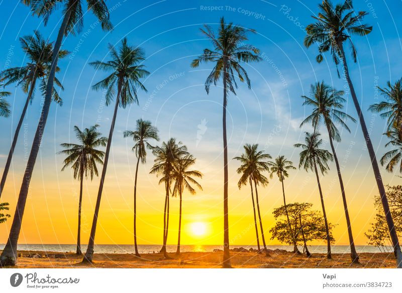 Sunset with palm trees on beach sunset landscape sea island ocean tropical travel summer sky beautiful silhouette nature coconut background vacation orange