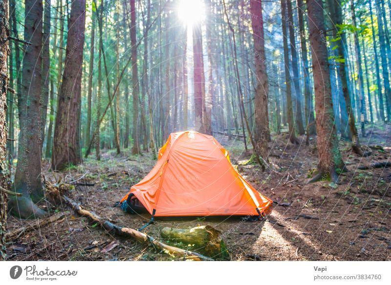 Orange tent in green forest tree sunset nature campsite sunrise trunk orange sunrays pine sun rays beautiful background summer park travel landscape adventure