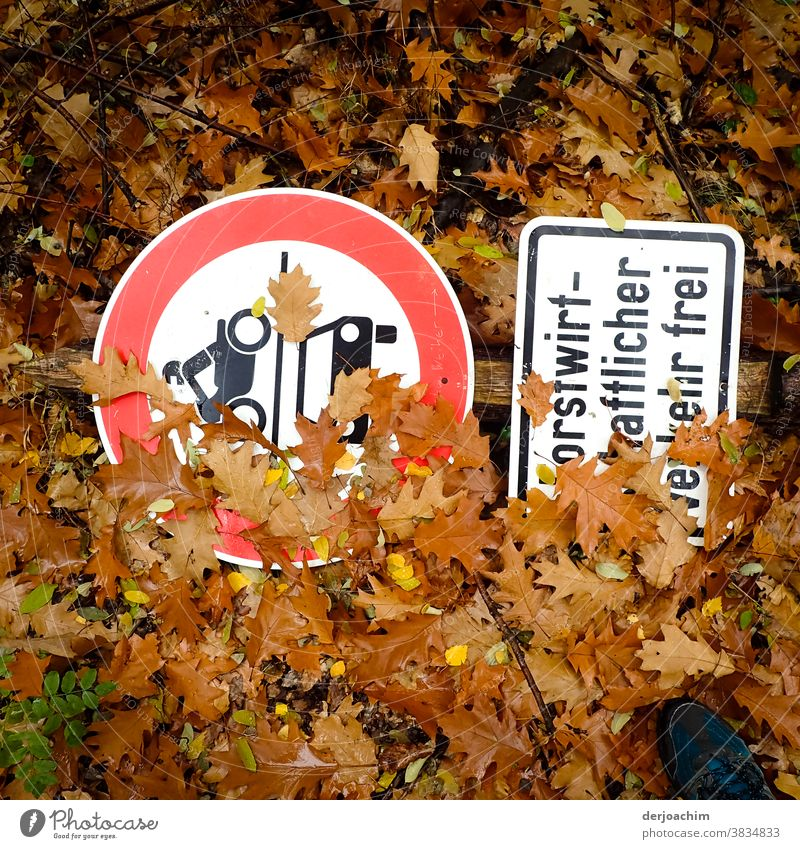 Signs in the forest, two traffic signs are on the forest floor. Partially covered by brown leaves. Signs and lettering Lines and shapes Nature Colour photo