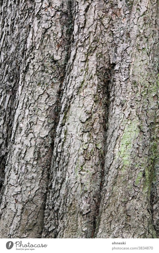 trunk Tree Tree trunk bark Structures and shapes Forest death Wood Forestry Environment Nature