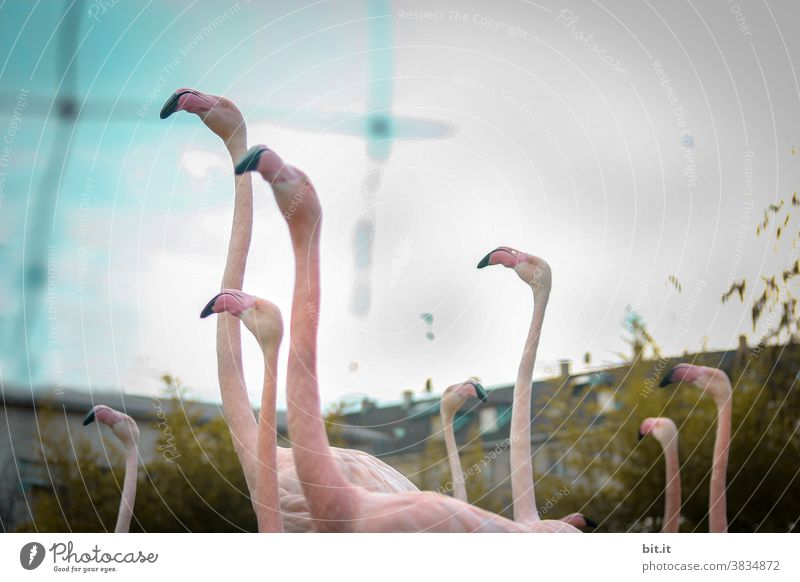 Come on, let's go around the houses. Flamingo Bird Flock group Peer pressure birds Pink Animal animals Group of animals animal world Wild animal Nature Captured