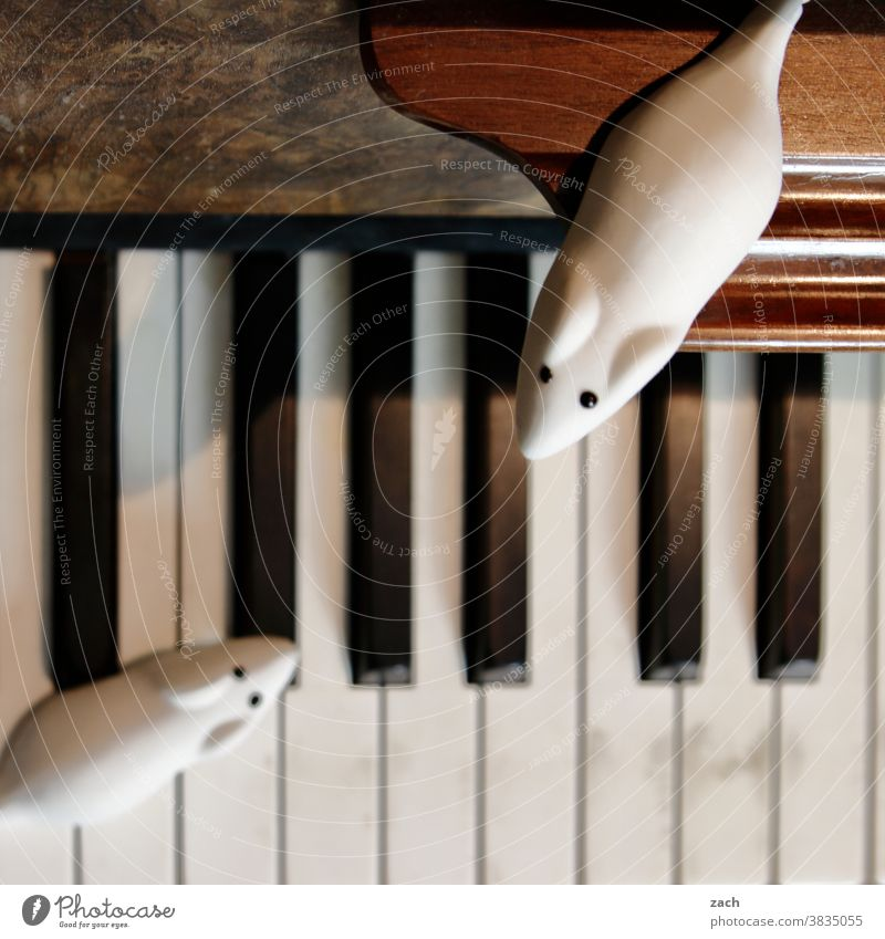 Artists and Auditorium Mouse mice Pests Insect destroyer Candy sweets Rubber toy animal Musician musical Piano Pianist piano Play piano Audience