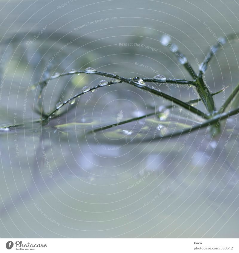 jewels Nature Sunlight Spring Summer Plant Grass Glass Water Line Network Drop Touch Glittering Cry Simple Fluid Fresh Beautiful Wet Natural Clean Blue Gray