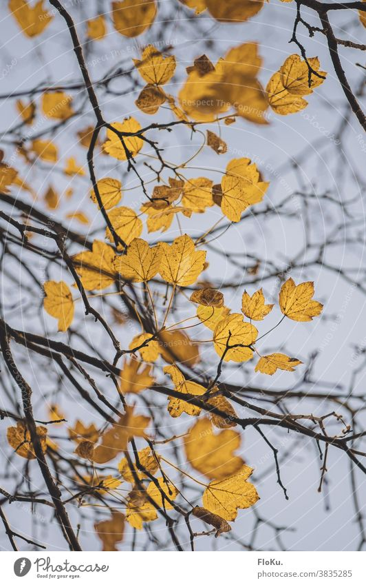 Yellow leaves against autumn sky Autumn foliage autumn mood Branch branches twigs Autumn leaves Tree Treetop Nature Environment Plant Gloomy Bad weather
