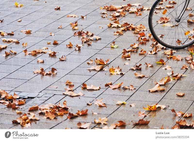 Front wheel of a bicycle with autumn leaves Bicycle pavement Paving stone Gray Brown Autumn Autumn leaves Gloomy rainy rainy weather Orange Exterior shot