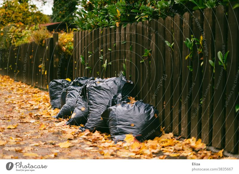 Garbage bags full of leaves on the sidewalk in front of a fence foliage refuse sacks Gardening Autumn rake off Fence Autumn leaves Bags Disposal