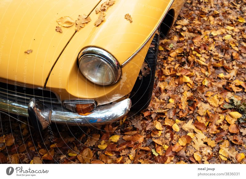 Yellow autumn leaves on yellow bonnet - Oldtimer MG Autumn Seasons autumn colours Brown car Vintage car Chrome detailed view Floodlight Bumper view from above