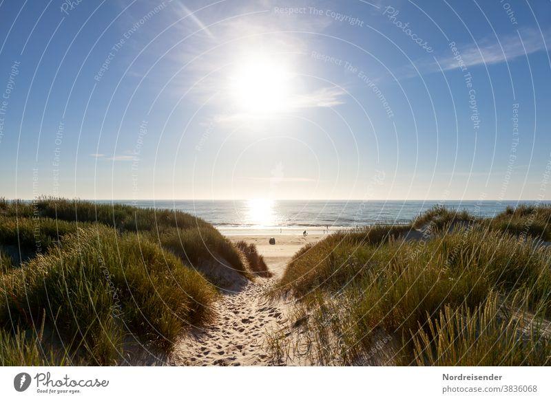 Path through the dunes with a view of the beach of the North Sea Baltic Sea Ocean Water Beach duene car beach Back-light Grass Marram grass reflection glisten