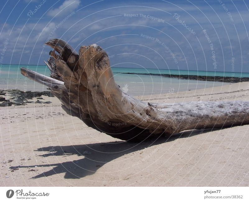 Sky Tree Ocean Beach Vacation & Travel Contentment Island Mozambique