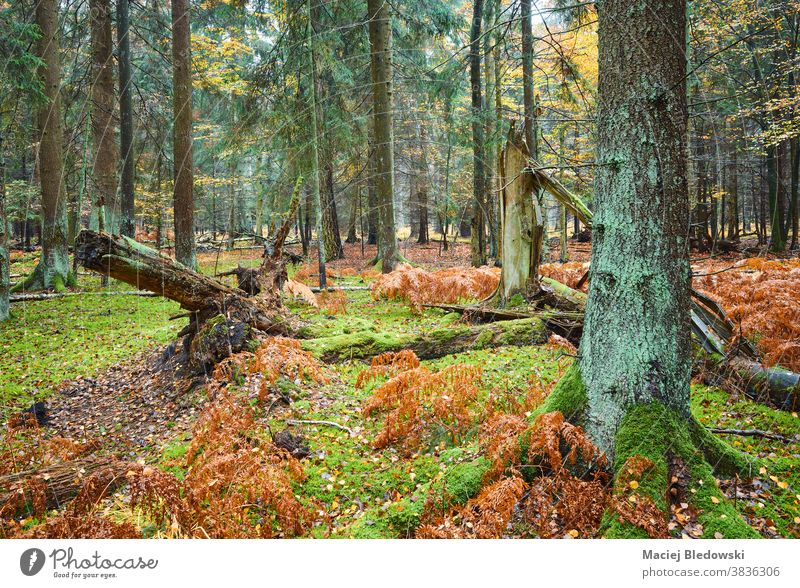 Deep forest with fern and moss in rainy autumn. deep wet tree fall nature landscape green foliage season colorful plant natural environment outdoor beautiful