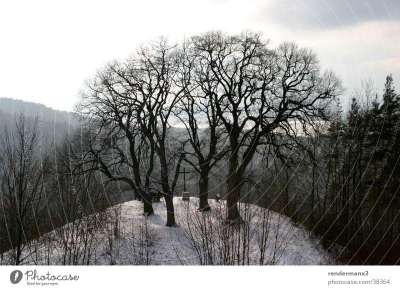 Winterberg Tree Hill Wood Mountain Snow