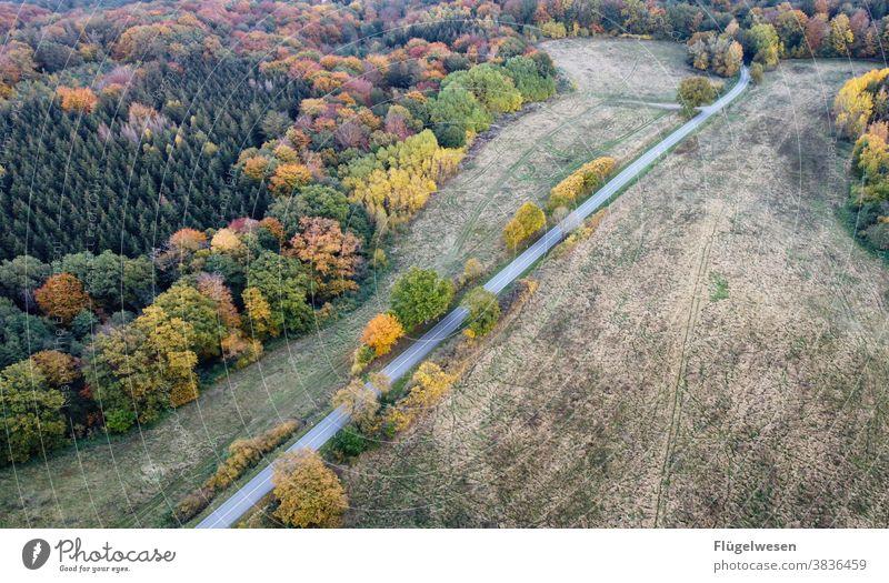 autumn painting Autumn Autumnal Autumn leaves Autumnal colours Early fall Automn wood Autumnal weather Autumnal landscape Sense of Autumn Autumn wind Street