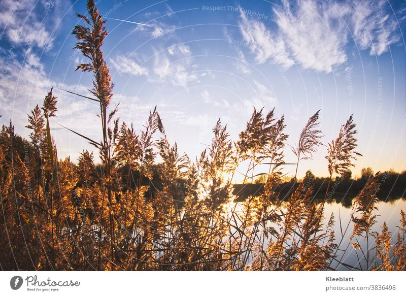 Impressions at the lake - sunset atmosphere seen through tall grasses Sunset Moody evening mood Autumnal silent tranquillity Landscape Nature Exterior shot Sky