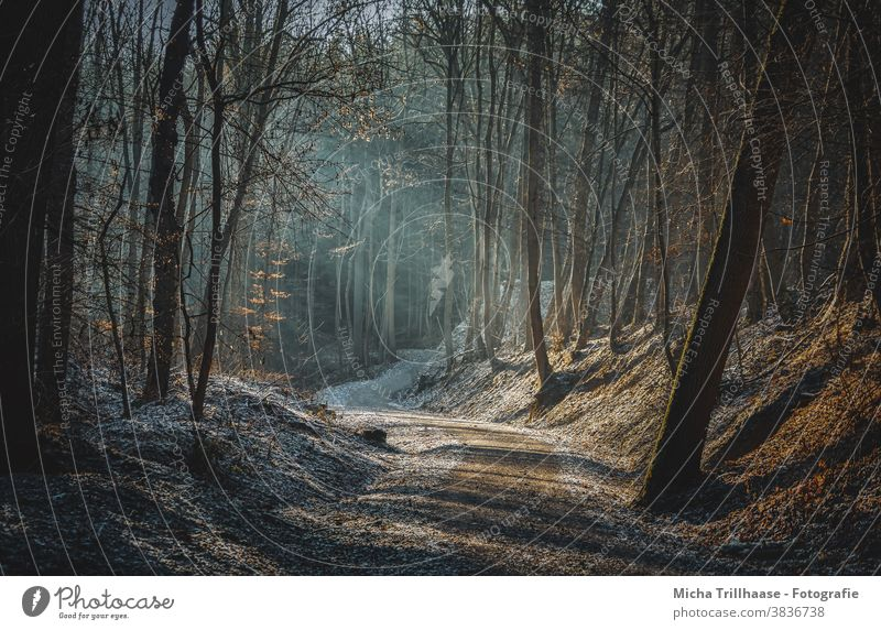 Sunbeams in the forest Light (Natural Phenomenon) Forest Tree Autumn Winter Beautiful weather Sunlight Nature Landscape Hiking Relaxation naturally Flare