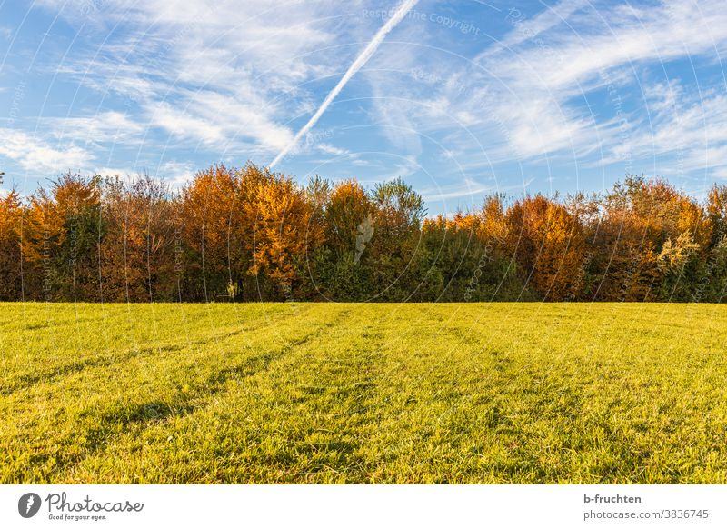Pasture and forest in autumn autumn colours Autumn Season Willow tree Meadow Green Grass Nature Sky Landscape Tree Clouds autumn light Autumn leaves variegated