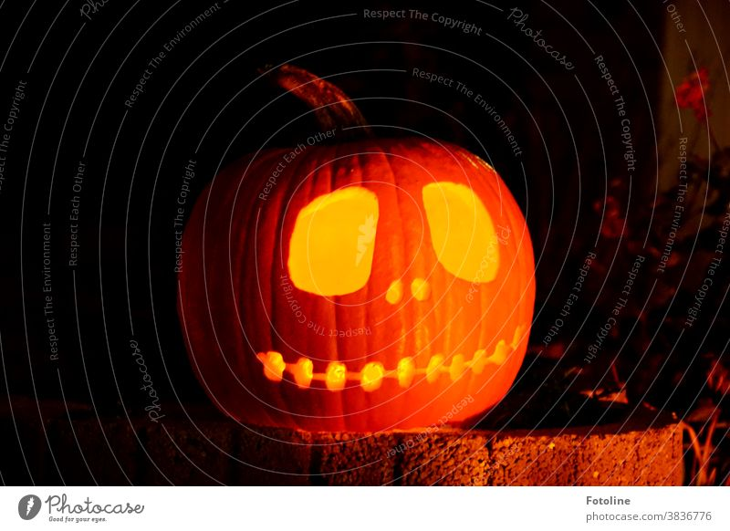 Hello there! - or a Halloween pumpkin stands on a rock garden and shines brightly. Hallowe'en Pumpkin Carve Carving Orange Autumn Vegetable Food October