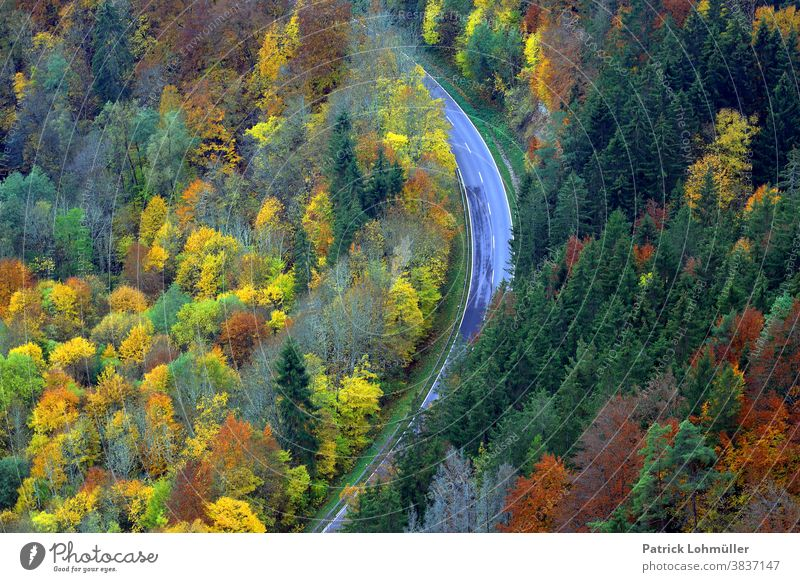 Autumn loop autumn mood trees Forest Street from on high Vantage point outlook Forest path Upper Danube valley travel Tourism Baden-Wuerttemberg Germany Europe
