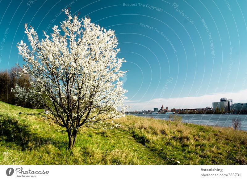 spring Environment Nature Landscape Plant Sky Clouds Horizon Spring Weather Beautiful weather Warmth Tree Flower Grass Bushes Leaf Blossom Park Meadow Forest