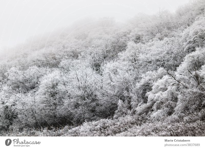 Ethereal scene of a forest covered in winter frost ethereal winter scene climate wintry frigid seasonal winter landscape snow covered trees fairytale wonderland